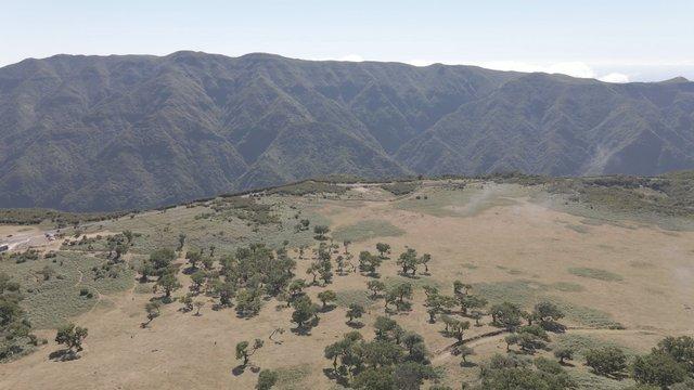 Gorgeous Mountain Landscape, Fanal Madeira Island thumbnail