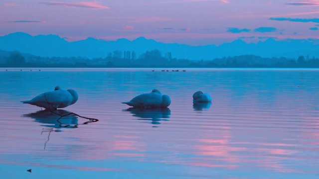 Swan Lake and a Blue Sunset thumbnail