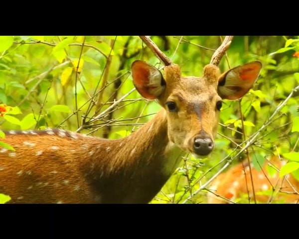 Mudhumalai wildlife Safari