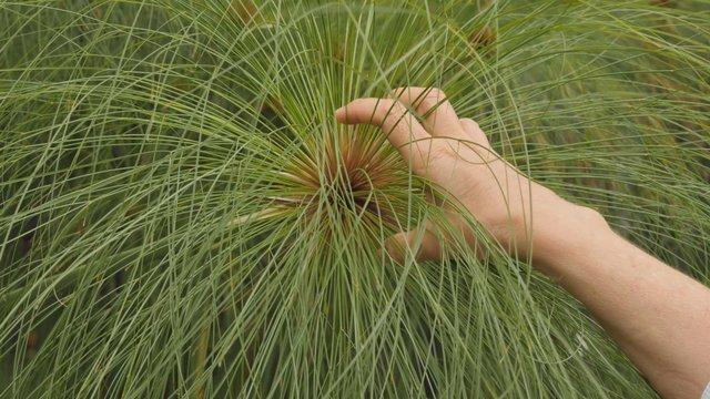 Hand Holding Botanical Plant thumbnail