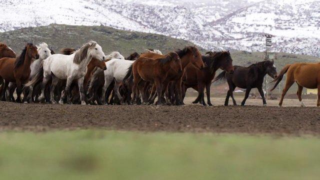 Wild Horses in the Mountains thumbnail