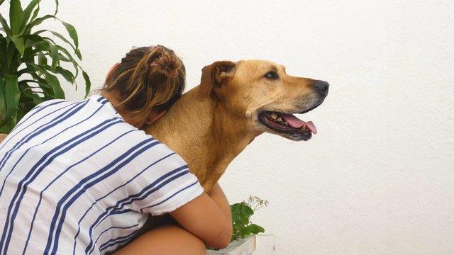 Girl Hugging a Dog  thumbnail