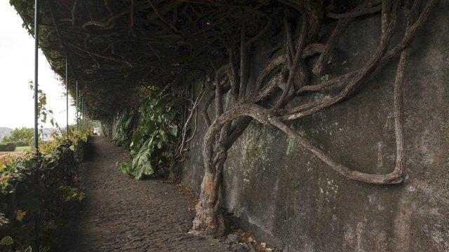 Wall Details at Madeira's Botanical Garden  thumbnail