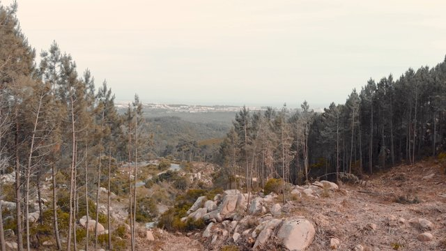 Forest in Sintra, Portugal thumbnail