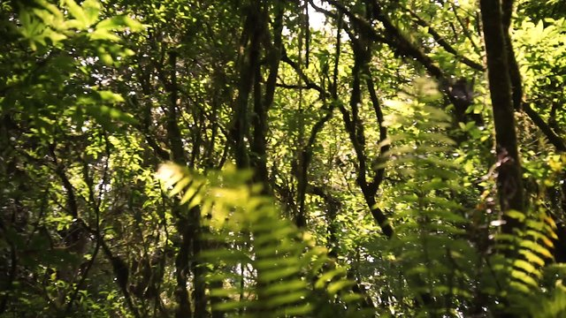 The Forest In North Island  thumbnail