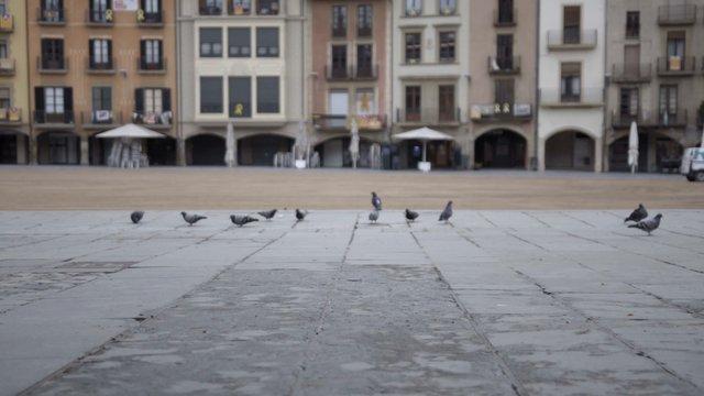 Pigeons in Spanish Square thumbnail