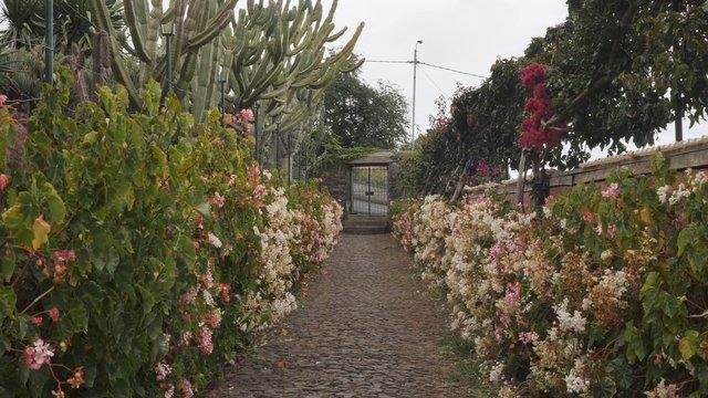 Flower Alley in Botanical Garden  thumbnail
