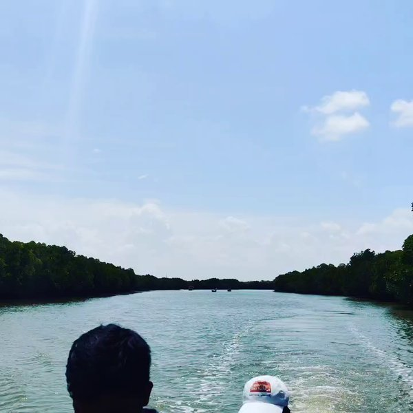 Mangrove Forest - Pichavaram (Day out near Pondicherry)