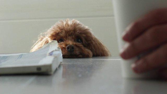 Adorable Dog Eyeing a Latte thumbnail