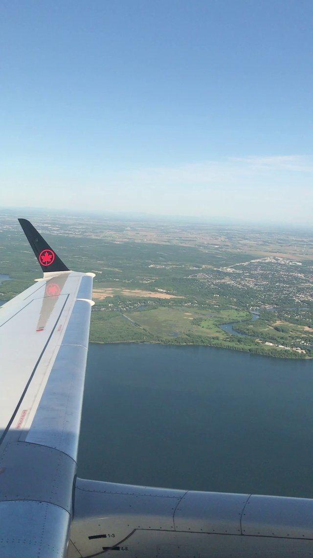 Maple Plane Wing thumbnail