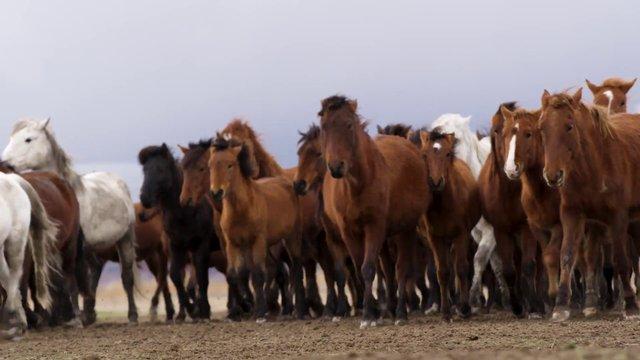 Wild Horses thumbnail