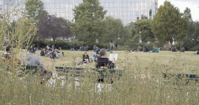 Man Reading a Book in Paris Park  thumbnail