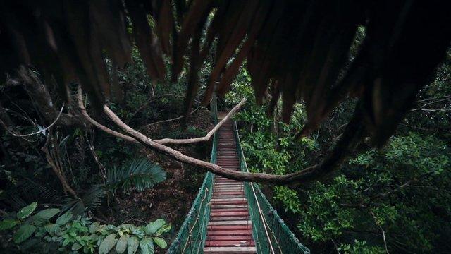 Cinematic Jungle Bridge thumbnail