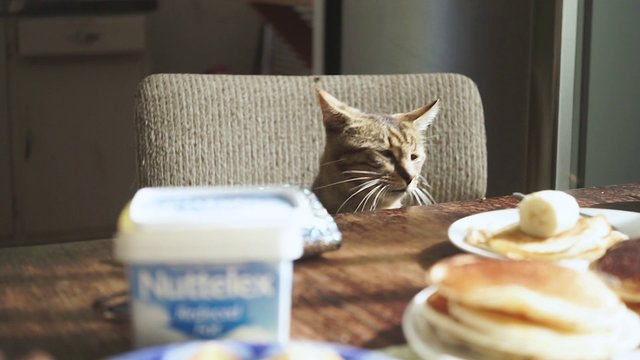 Cat At Breakfast Table thumbnail