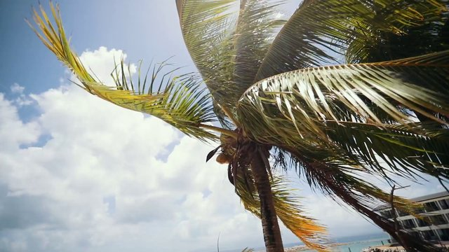 Palm Tree in the Wind thumbnail