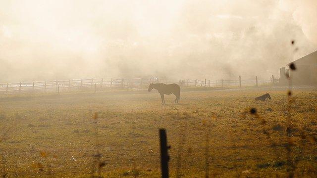 Horses on Mist Farm  thumbnail