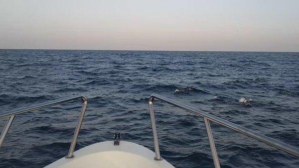 Maldivies Dolphin view