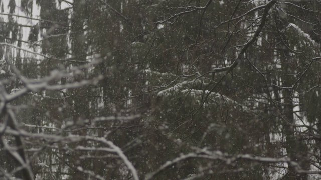 Calming Snowflakes in a Forest thumbnail
