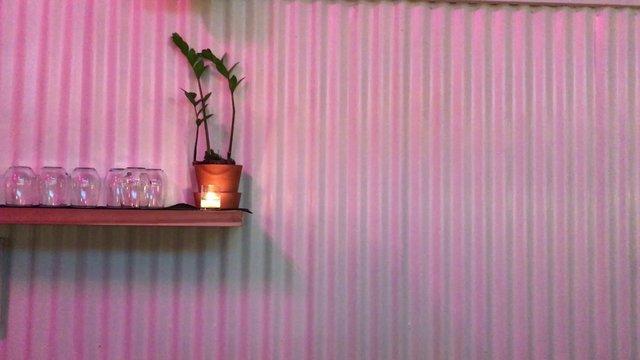 Pink Wall and a Plant thumbnail