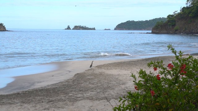 Bird Walking On The Beach thumbnail