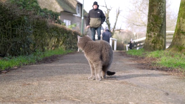 A Cat On The Path While A Dog Is Coming thumbnail