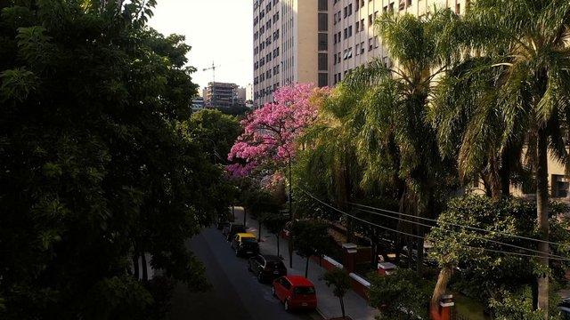 Empty Blossom Street thumbnail