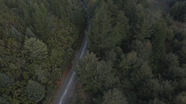 Aerial view of a Road in the Forest thumbnail