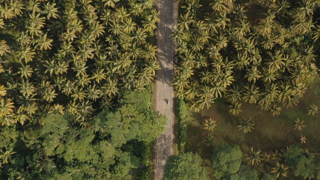 Road Through Palm Forest thumbnail