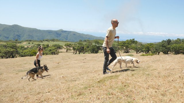 A Couple Walks With Dogs in the Beautiful Glade thumbnail