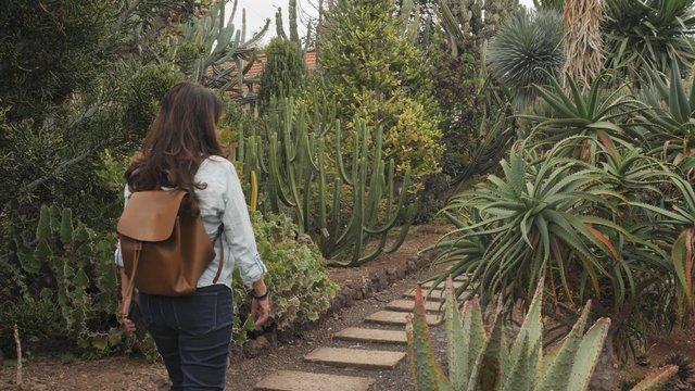 Tourist Takes Photos in Botanical Garden thumbnail