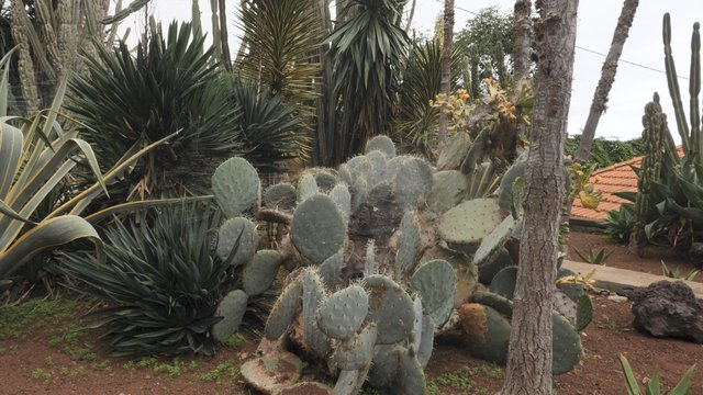 Exotic Plants in Botanical Garden  thumbnail