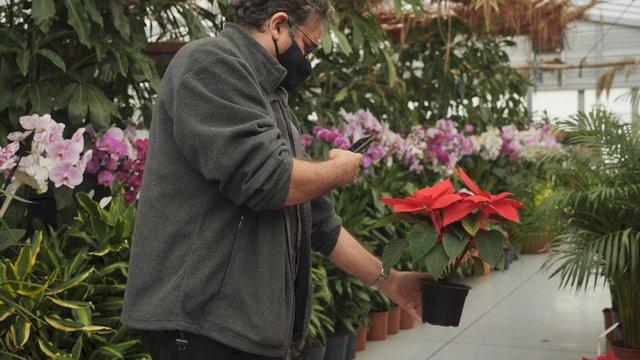 A Man Makes a Photo of Poinsettia thumbnail