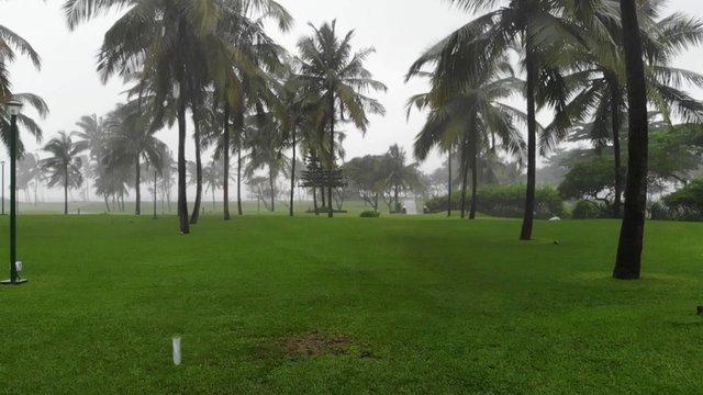 Rain in Palm Tree Garden thumbnail