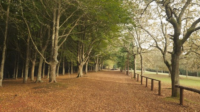 Colorful Landscape of Autumn Forest thumbnail
