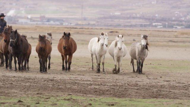 Horses with Cowboy thumbnail