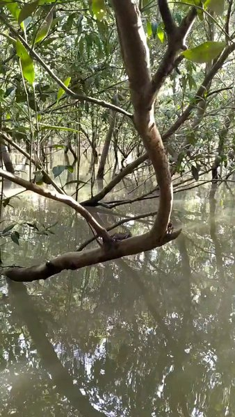 Into the wild-2: Inside the Mangroves of Sunderban