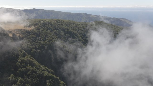 Mountains Covered by Fog, Fanal Madeira Island thumbnail