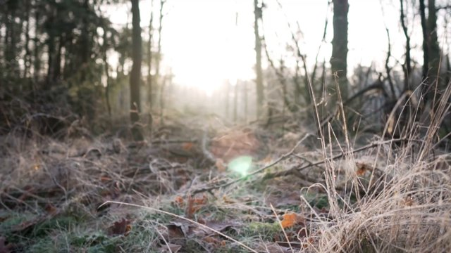 Sunrise In The Woods thumbnail