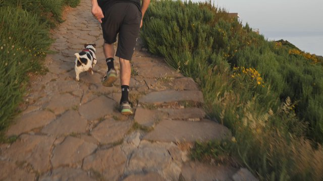 Man Running with 2 Dogs on Mountain Trail  thumbnail