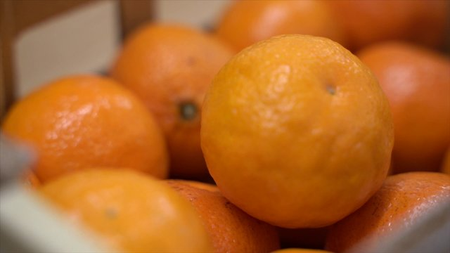 Hand Picking Out Tangerines thumbnail